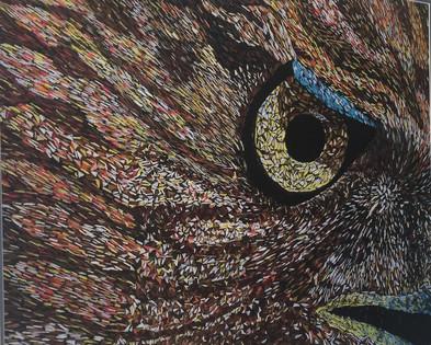 Hawk eye.jpeg