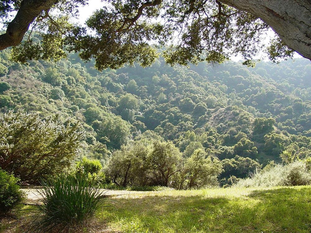 """Chaparral canyon landscape Los Altos Hills CA"