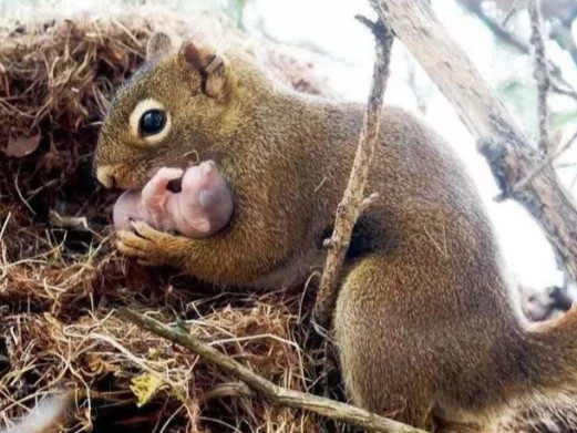 """Mother squirrel holding baby in nature setting"""