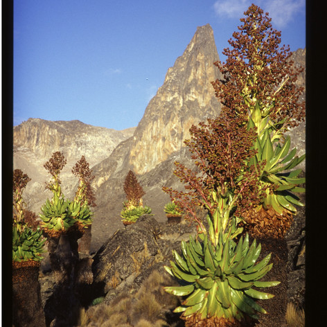 Pt. John, Mt. Kenia
