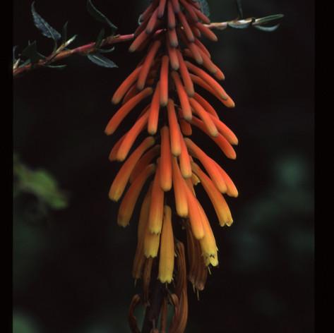 Vielfältige Flora