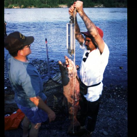 Erster Lachsfang