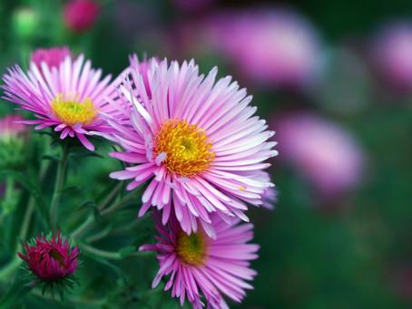 Otoño y su top 10 de flores primera parte