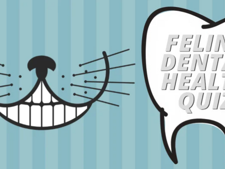 Feline Dental Health Quiz