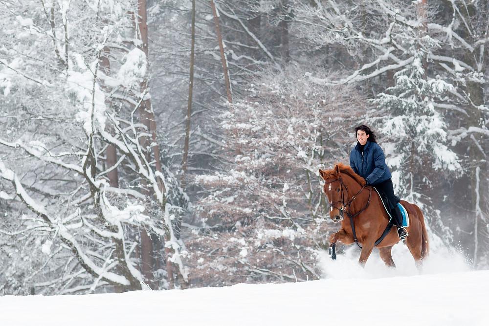 Ein Schneegalopp erfreut Pferde- und Reiterherz