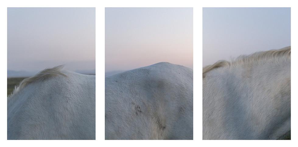 bergpferde.jpg