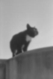 cat02-webNEU.jpg