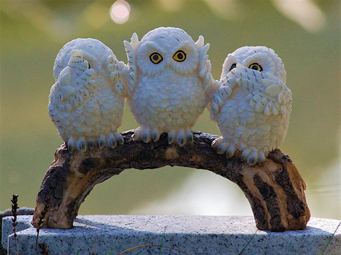 3 petites chouettes blanches