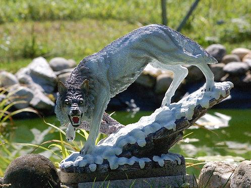 Loup gris grognant