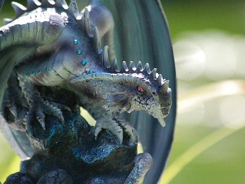 Rock Dragon (adulte)