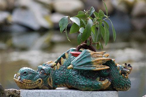 Dozing Dragon, pot pour plante