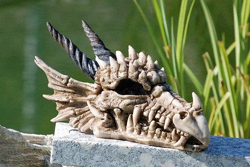 Boîte crâne de dragon