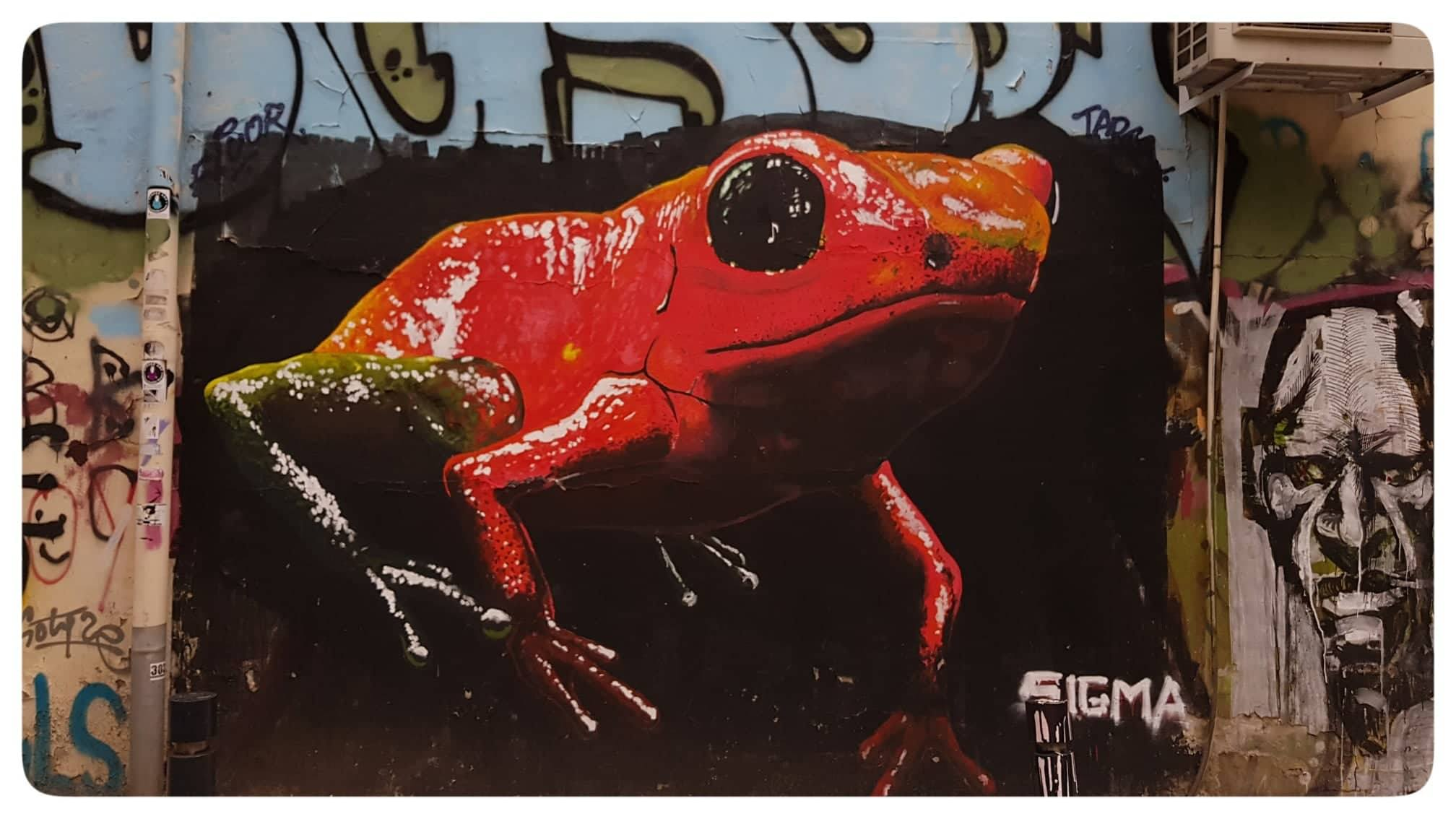 """The Frog"" - Artist : SIGMA"
