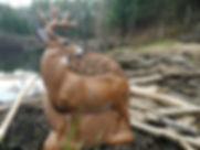 Deer Target field testing