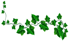 Ivy Lead.png