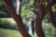 bark-bushes-celebration-250702.jpg