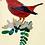 Jockomo מדבקת ציפור כנרית