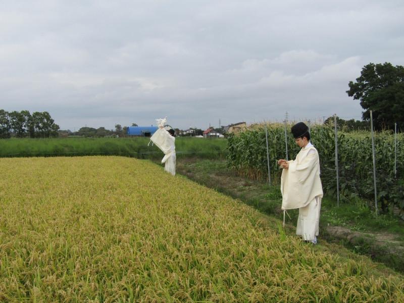 穂刈祭②.jpg