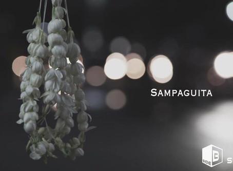 フィリピンの国花「サンパギータ」Sampaguita