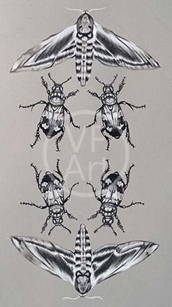 Privet Hawk Moth & Carrion Beetle