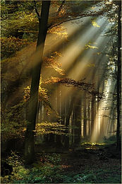 Lichtstrahlen im Eifelwald.jpg