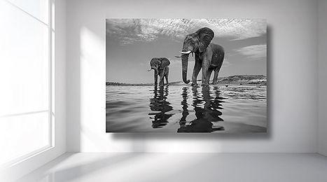 Aluminium-printed-photo-of-elephants-alu