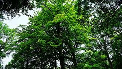 Bright Green Tree.jpg