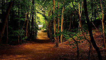 Downhill Path.jpg