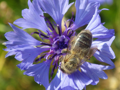 Saving Local Bees: An Appeal to Landowners