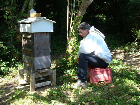 When a Spirit of True Enquiry Infuses our Beekeeping