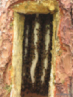 Interior of tree hive