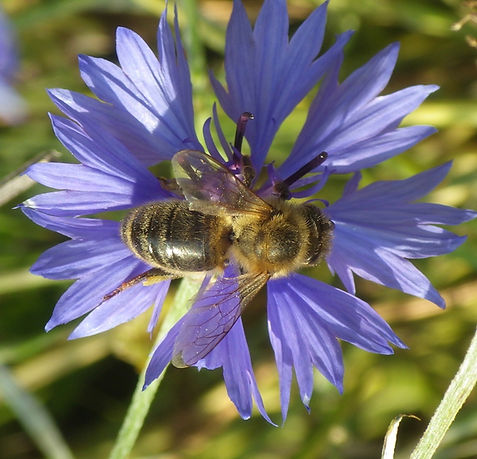 Feral or Wild Bees? | Natural Beekeeping Trust
