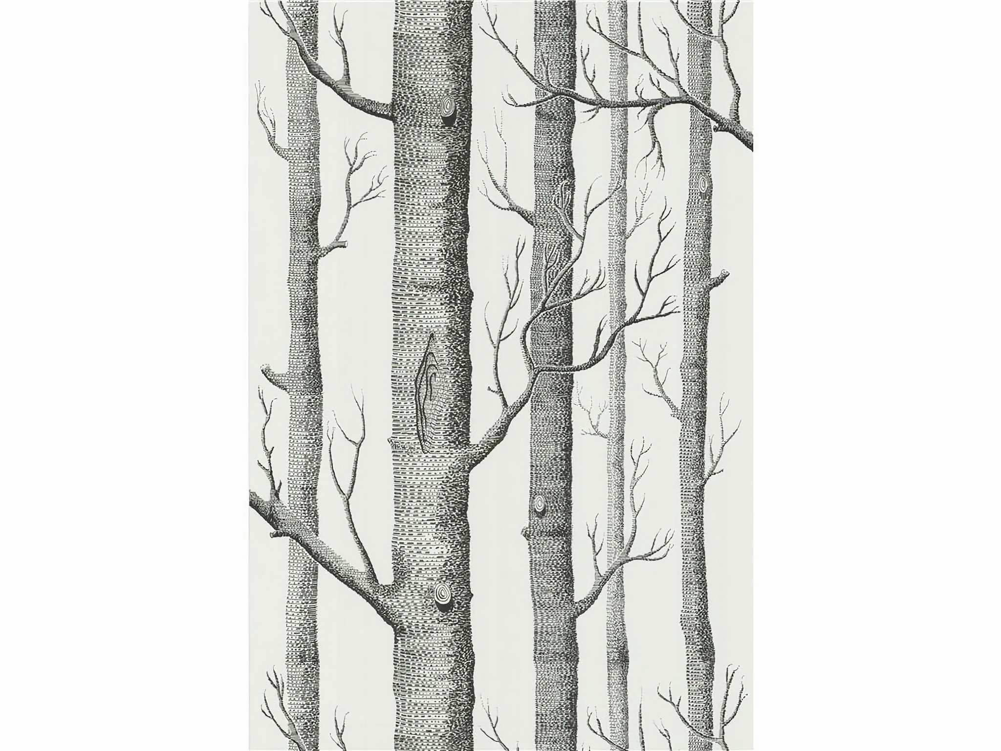 Cole And Son Woods wallpaper / woods wallpaper in onyx/whitecole & son