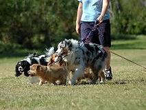 dog walking.jpg