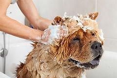grooming list 4.jpg