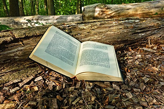 Book in outdoors.jpg