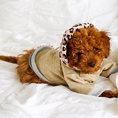 Sassy Pooch Dog Hoodie_4a.png