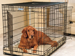 Why your Dog should be in a Crate…