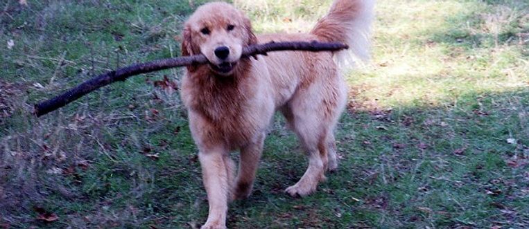 Oscar with a stick (LOG)