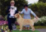 Oscar, Best Puppy Lost Coast Kennel Club