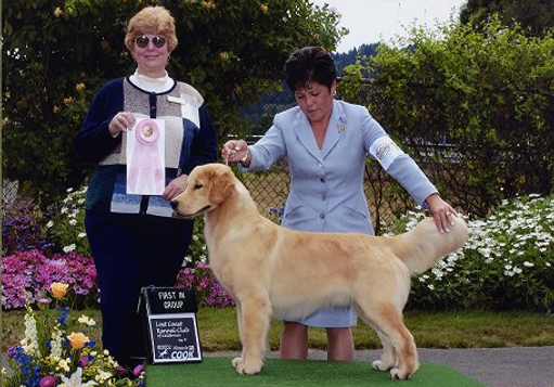 Oscar, Best Puppy Lost Coast Kennel Club