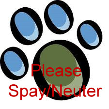 Why you need to spay/neuter your pet…