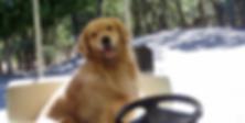 Barron loves his golf cart rides