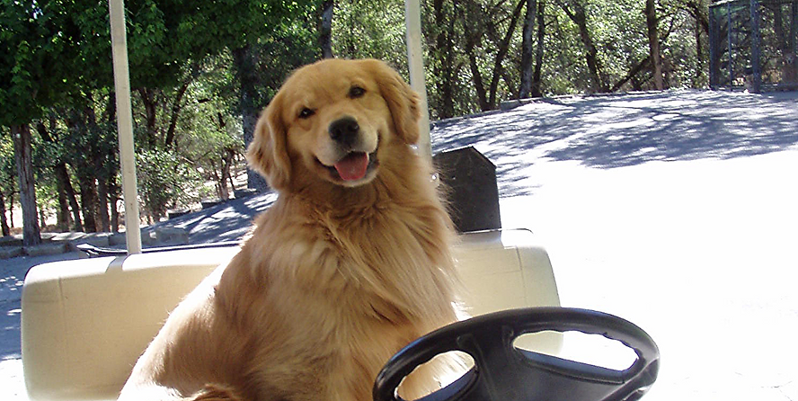 Barron loves his golf cart rides