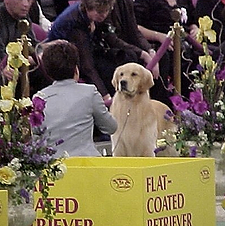 Bentley in Group Competition at Westminster