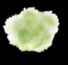 tache verte_Plan de travail 1.png