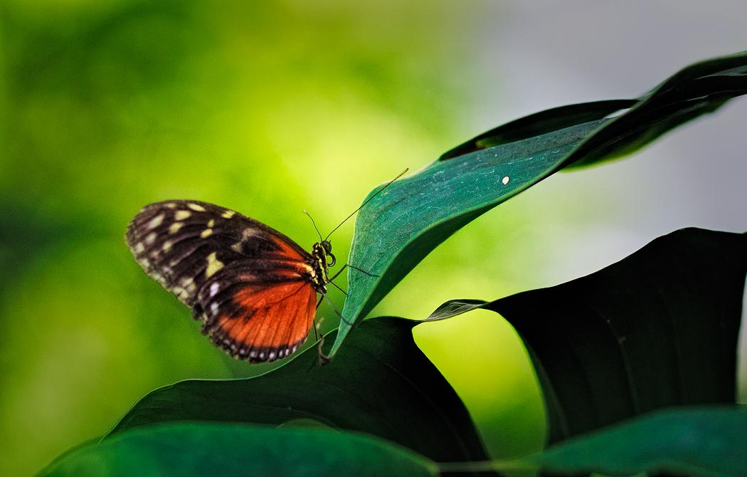 蝴蝶9.jpg