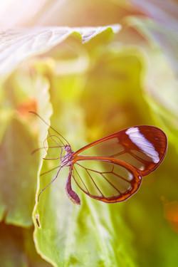 蝴蝶2s.jpg