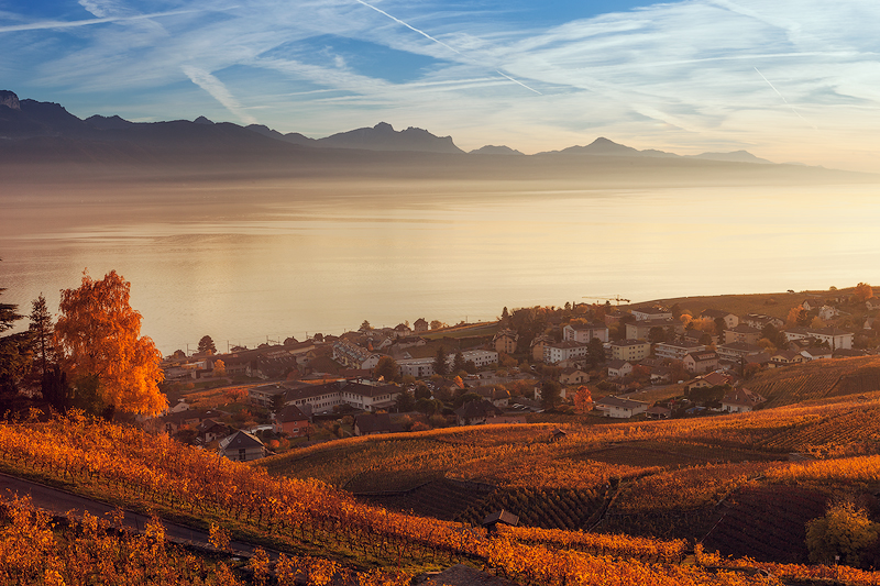 Lavaux-Vineyard42