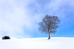 蓝天与雪4.jpg